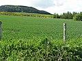 Pittachope Plantation from Balhalvie - geograph.org.uk - 1316339.jpg
