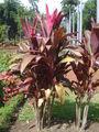 Plant dsc07298.jpg