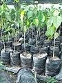 Plantones La Mochila.jpg