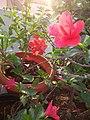Plants at Bijalinagar 93.jpg