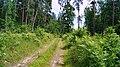 Platones pagasts, Latvia - panoramio (1).jpg