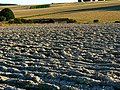 Ploughed field, south of Easton Royal - geograph.org.uk - 516336.jpg