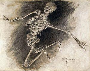 Studium szkieletu (\