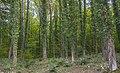 Podnožje Vlaških planina.jpg