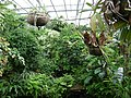 Poland. Warsaw. Powsin. Botanical Garden 150.jpg