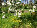Poltava Botanical garden (109).jpg