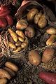 Pommes de terre Cl j weber04 (23568711172).jpg