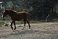 Pony and Woman - Debagram - Nadia 2014-11-28 0007.JPG