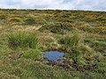 Pool, Dockwell Ridge - geograph.org.uk - 1469970.jpg