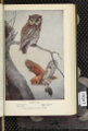 Portraits and Habits of Our Birds-1 0079-scan.png