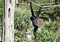Posing on A Rope (14417441225).jpg