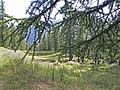 Près du lac de Peyrol (Vars, Sainte-Marie, Hautes-Alpes) - panoramio.jpg