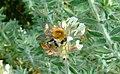 Praha, Trója, Botanická zahrada, opylování květin II.jpg