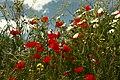 Primavera (spring) (26578202885).jpg