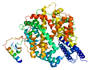 Protein ACE2 PDB 1r42.png