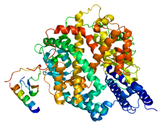 Angiotensin-converting enzyme 2 Exopeptidase enzyme that acts on angiotensin I and II