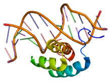 Protein HOXA6 PDB 1ahd.png