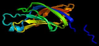 PRKCH protein-coding gene in the species Homo sapiens
