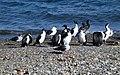Punta Arenas Chile - panoramio.jpg