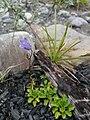 Purple flower growing out of fireplace.jpg