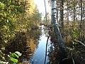 Purvs -Swamp - panoramio (2).jpg