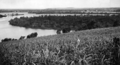 Queensland State Archives 1948 Tweed River from Sextons Hill Chinderah in distance and sugarcane in foreground c 1934.png