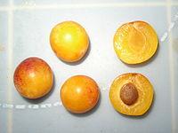 Tres ciruelas enteras y dos mitades, Prunus domestica var. syriaca