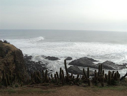 Partial view of the Punta de Lobos beach. Image: Diego Grez.