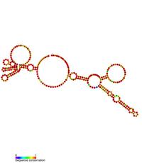 Rous Sarcoma Virus Wikipedia