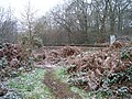Railway near Jarvis Brook - geograph.org.uk - 647838.jpg