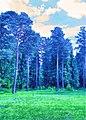 Ramensky District, Moscow Oblast, Russia - panoramio - Andris Malygin (19).jpg