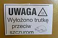 Rats Poznan.JPG
