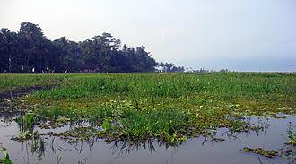 Lake Rawa Pening - Many species of aquatic plants are found at Rawa Pening