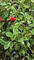 Red among greens.jpg