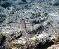 Red sea-reef 3273.jpg