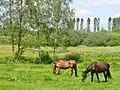 Rehbruecke - Am Buschweg - geo.hlipp.de - 37866.jpg
