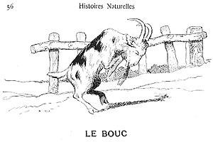 Chèvre Vikidia Lencyclopédie Des 8 13 Ans