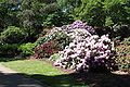 Rhododendronpark Bremen 20090513 136.JPG