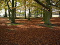 Richmond Park understorey.jpg