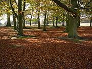 Richmond Park understorey