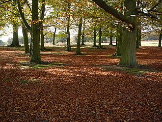 Richmond Park - The park is a national nature reserve.
