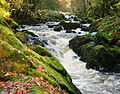 River Erme above Ivybridge 2.jpg