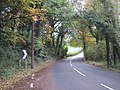 Road through the trees - geograph.org.uk - 1025915.jpg