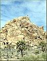 Rock Climber, Joshua Tree NP 4-13-13a (8654767209).jpg