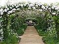 Rose, Paul's Himalayan Musk Rambler, バラ, ポールズ ヒマラヤン ムスク ランブラー, (23747807260).jpg