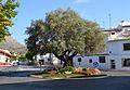 Rotonda de l'olivera, Xàbia.JPG