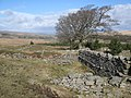 Ruins above Allenheads (2) - geograph.org.uk - 720634.jpg