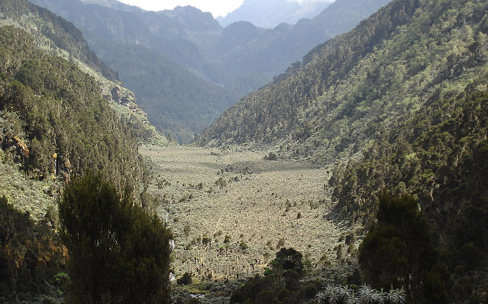 Ruwenzori Upper Bigo Bog