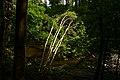 Rzeka Wałsza tworzy pod Pieniężnem piękną dolinę (Rezerwat Dolina Rzeki Wałszy). - panoramio.jpg