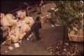 SANITATION WORKERS COLLECT GARBAGE ON 172ND STREET IN MANHATTAN - NARA - 549842.tif